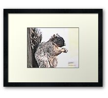 Mr. Squirrel Framed Print