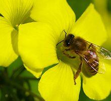 Bee by Jon Staniland