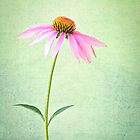 Simplicity by Colleen Farrell
