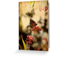 Hot August Afternoon Greeting Card
