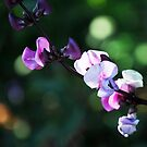 Colors of Nature by photo36