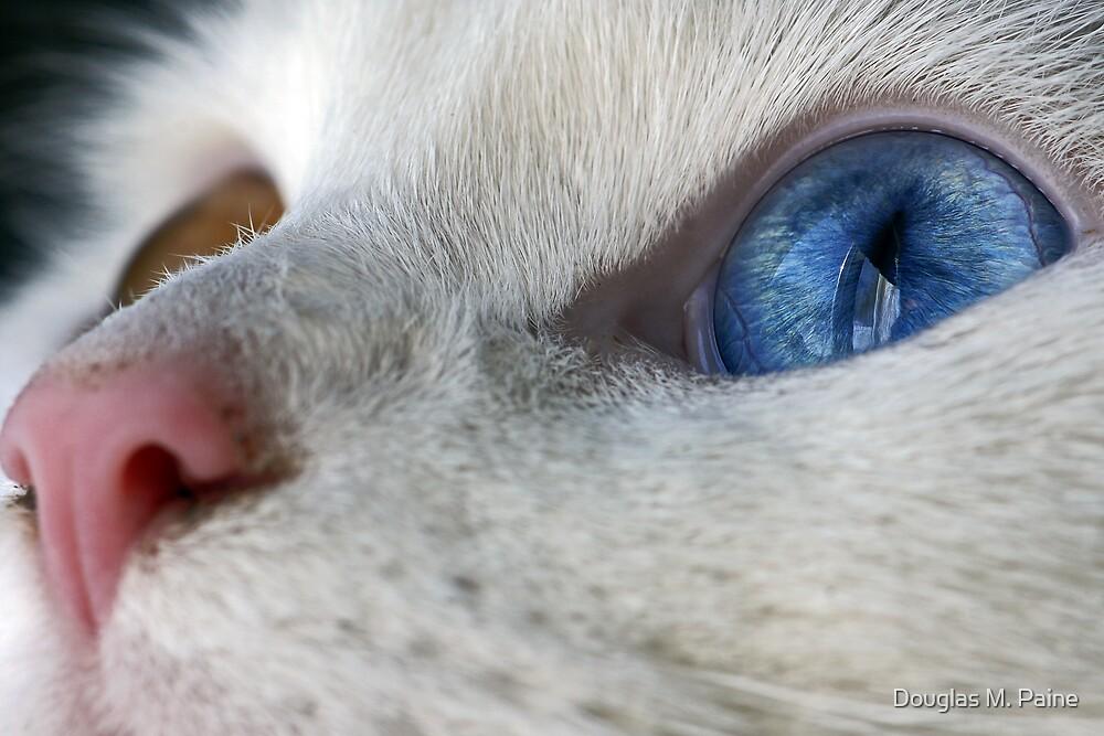 Daisy the Heterochromia eyed cat by Alphafish