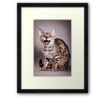 Bengal cat meows Framed Print