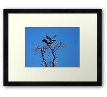 Vultures Landing Framed Print
