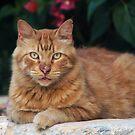 Cat by Christian  Zammit