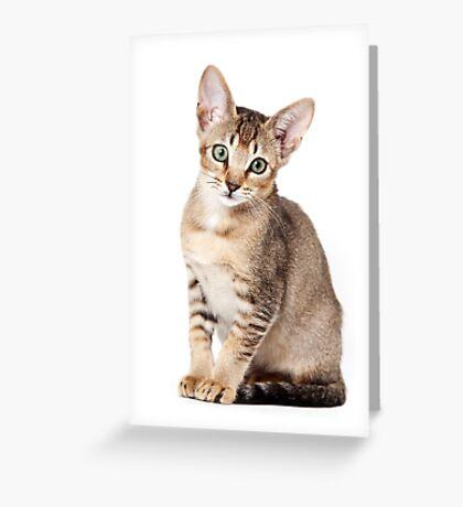 Charming kitten Greeting Card