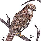 Redtail Hawk by artbyjehf