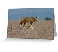 Lonesome Coyote Greeting Card
