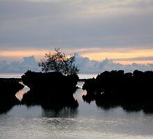 The Bonzai Tree by Varinia   - Globalphotos