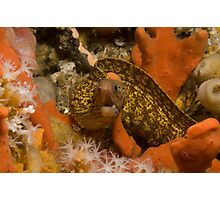 Sieve-Patterned Moray Photographic Print