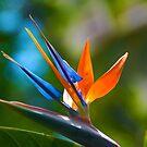 Bird of Paradise by Cheryl  Lunde