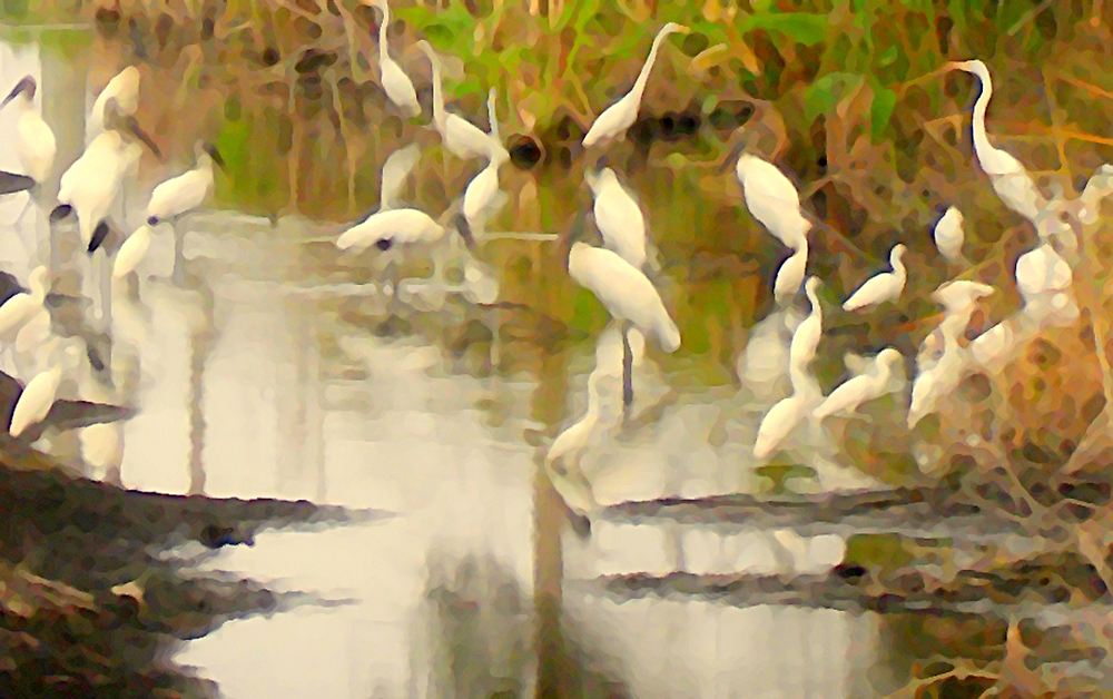 Storks and Egrets Watercolor: Survival   by Isa Rodriguez
