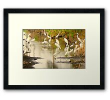 Storks and Egrets Watercolor: Survival   Framed Print
