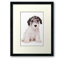 White Terrier puppy Framed Print