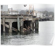 Monterey Bay Sealions Poster