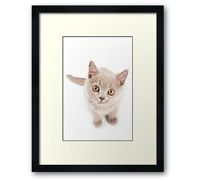 Funny cat with yellow eyes Framed Print