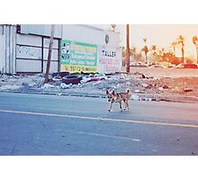 Mexican Chihuahua Photographic Print