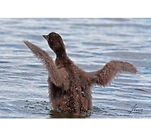 Learning The Ropes - Baby Common Loon Photographic Print