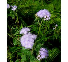 PLANTS IN THE WILD Photographic Print