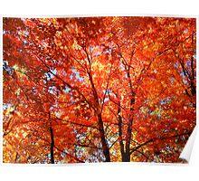 Soooo Autumn Poster