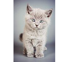 cute fluffy grey kitten Photographic Print
