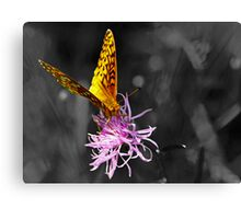 A Splash of Color (In an Otherwise Dull World) Canvas Print