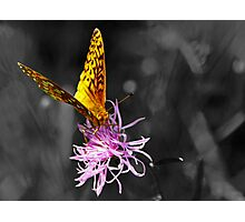 A Splash of Color (In an Otherwise Dull World) Photographic Print