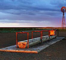 Cattle Trough - Hay Plains by Darren Stones