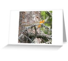 Robin in the wood Greeting Card