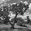Sedona in Black and White by Barbara Manis