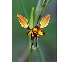 Wallflower-Orchid Photographic Print