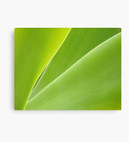 Smoooth Canvas Print
