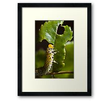 The Hungry Catterpillar (not! - read on...) Framed Print