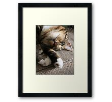 Upside Down Cat Framed Print