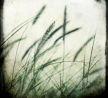 Grass series #2 by Jackie Cooper
