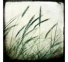 Grass series #2 Photographic Print