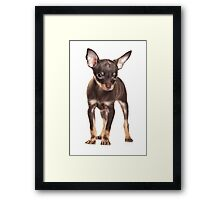 Brown Puppy Toy Terrier Framed Print