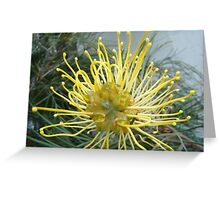 Opened wide - Pretty Grevillea inside Greeting Card