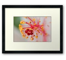 Grains of gold Framed Print
