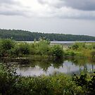 Marshes By The Lake by Len Bomba