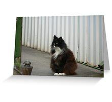 Beautiful cat ,black & white Greeting Card