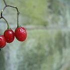 Three Berries by coffeenoir