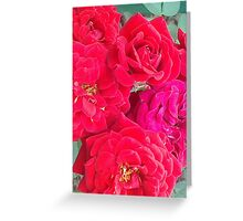 Roses of Red Greeting Card