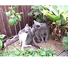 kissing cats Photographic Print