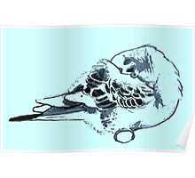 Sleeping Budgie Poster