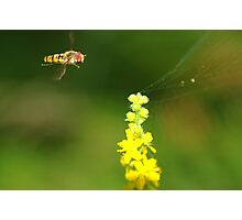 flying instant! Photographic Print