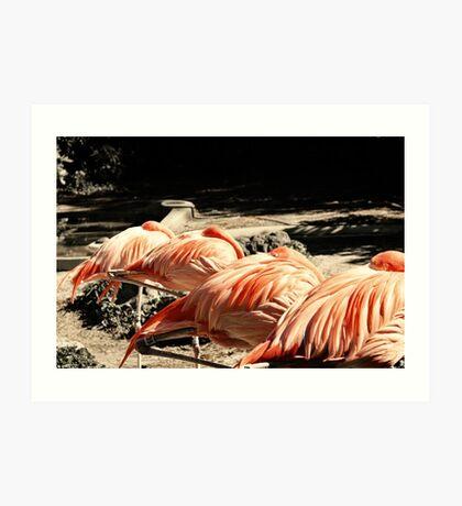 Sleeping Flamingos Art Print