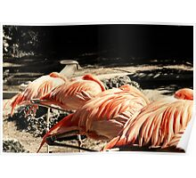 Sleeping Flamingos Poster