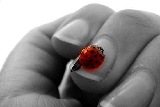 Ladybug, Ladybug fly away home! by Fiona Christensen