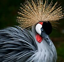 Grey Crowned Crane by LeeAnne Emrick